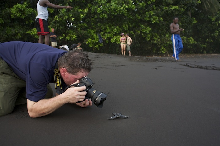 Joel Sartore takes photos of baby sea turtles heading into the surf as the scientists count them in the background.