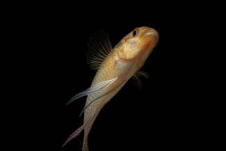 Mouloundo to Loubomo, Gabon 2012: Fish Biodiversity